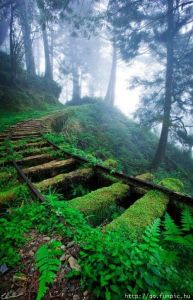 old-rail-in-forest
